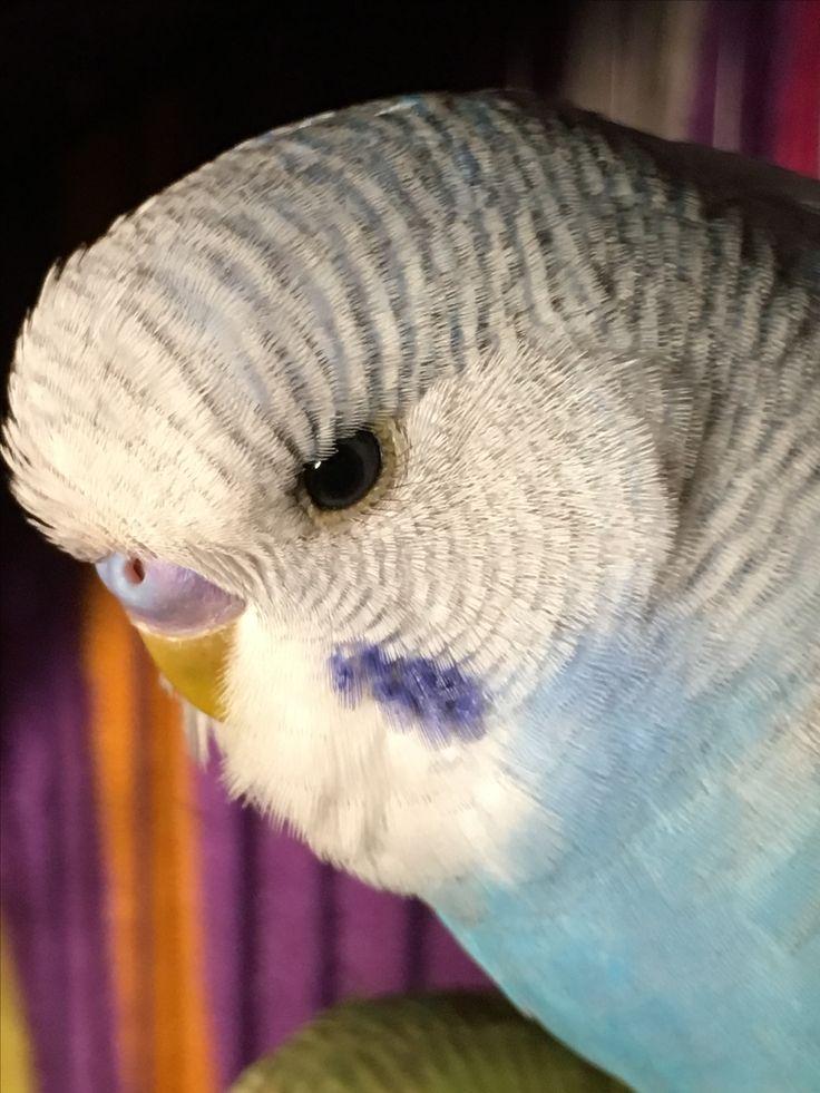Blueberry(Weird birdie)