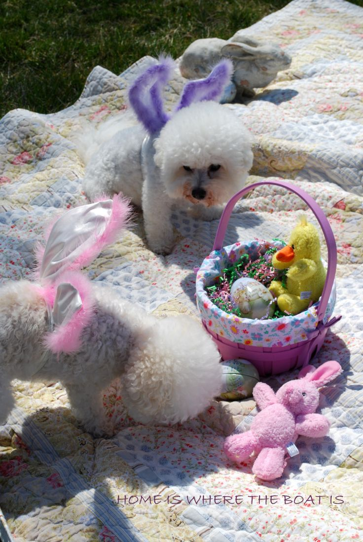 Chloe and Gracie and visit from the Easter Bunny| homeiswheretheboatis.net #NationalLoveYourPetDay