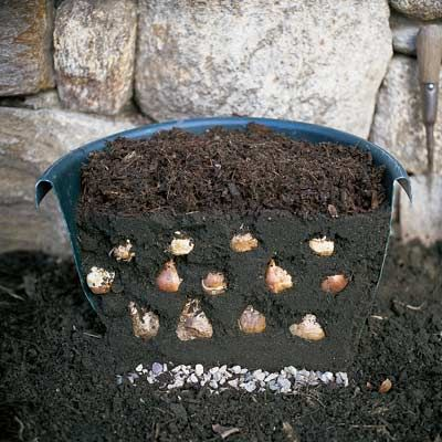 How to plant layers of bulbs now that will give you three bursts of color when spring arrives.   Photo: Brian Wilder   thisoldhouse.com