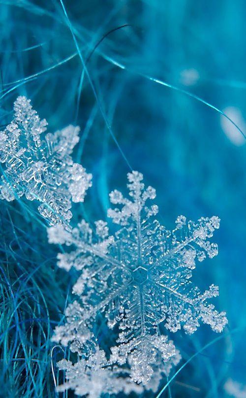Snowflakes ... flocons de neige et la beauté bleuté de l'hiver :-)