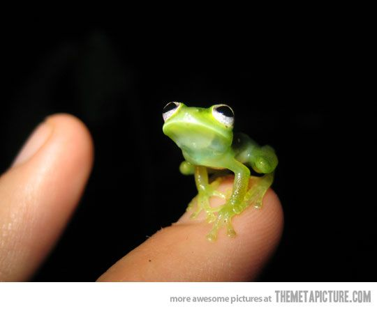 Kermit in real life