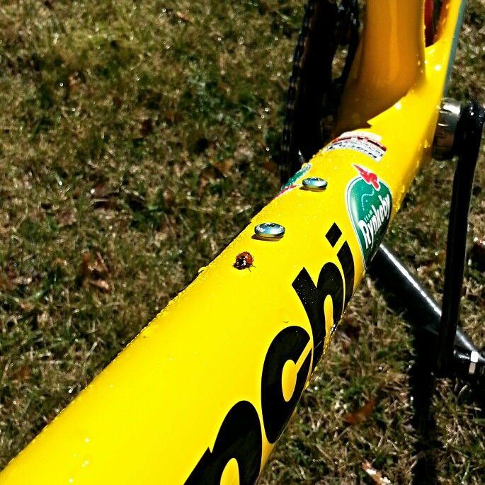 Ladybird on Team Rynkeby Bianchi Intenso