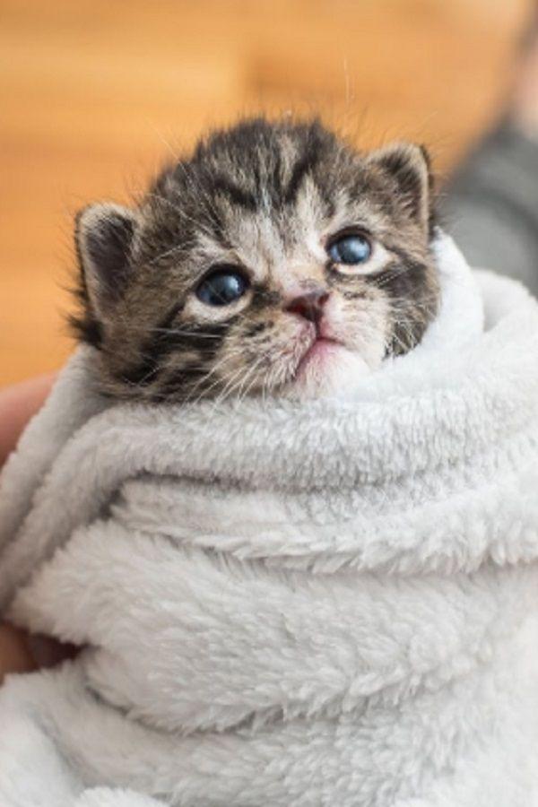 Ein Kitten Speichern Baby Katzen Katzen Susse Katzen