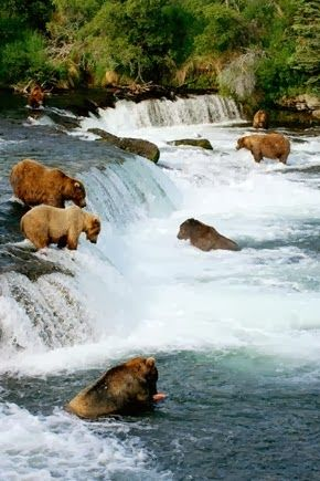 Katmai National Park and Preserve--King Salmon, Alaska