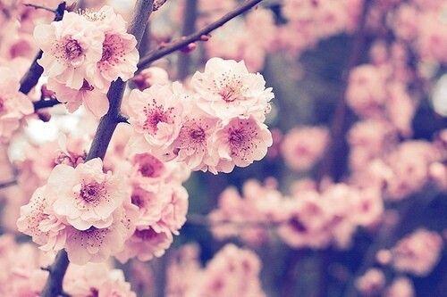 Flowers. ❇