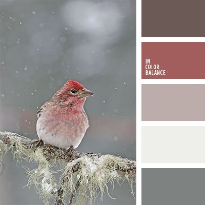 cvetovaya-palitra-1207 winter bird color palette with muted reds, white and gray