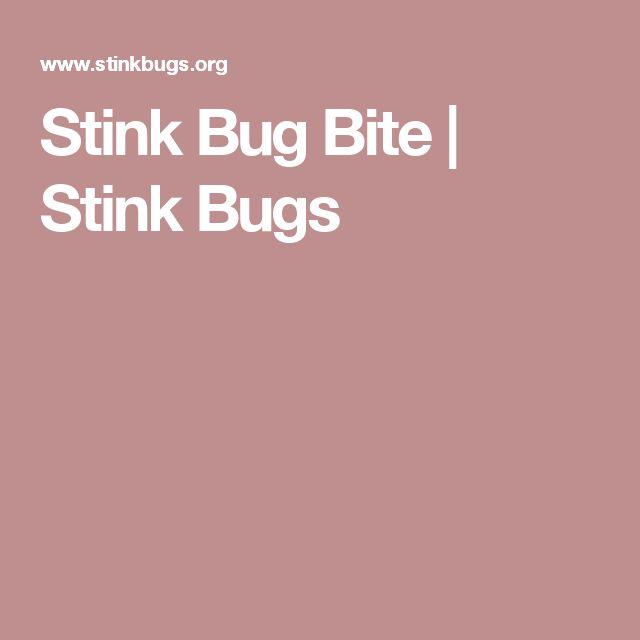 Stink Bug Bite   Stink Bugs