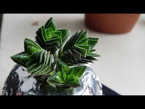 Restoring a Struggling Succulent FAST with Water Culture (48