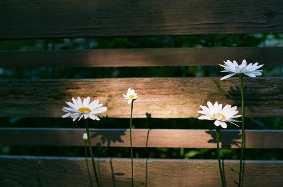 Flower luurve