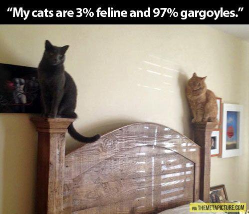 Cat gargoyles…