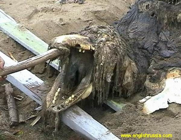 This creature was found by Russian soldiers on Sakhalin shoreline near to Japan, it's the most eastern part of Russia. People don't know what is it. According to the bones and teeth – it is not a fish. According to its skeleton – it's not a crocodile or alligator. It has a skin with hair or fur. It has been said that it was taken by Russian special services for in-depth studies.