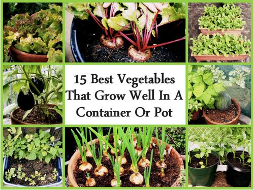 15 best vegetables that grow in a container or pot http - Best vegetables for container gardening ...