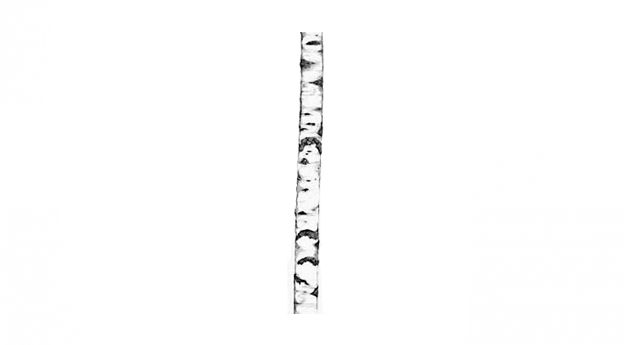 s a l e | urban nature, tree | mesmetric concept store | 160,-