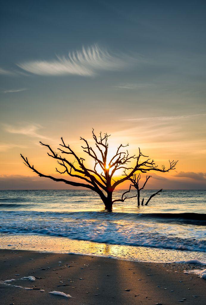 "breathtakingdestinations: ""Boneyard Beach - Edisto Island - South Carolina - USA (von alnicol2000) """