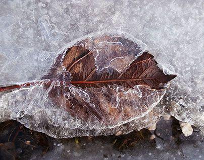 """Consultate il mio progetto @Behance: """"foglia sotto il ghiaccio"""" https://www.behance.net/gallery/27652745/foglia-sotto-il-ghiaccio"""