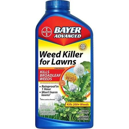 Home Depot, Bayer Advanced for dandelions - Google Search