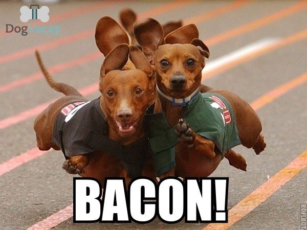 For more LOL's, click here: http://blog.dogvacay.com/photo-gallery-dog-memes-3/