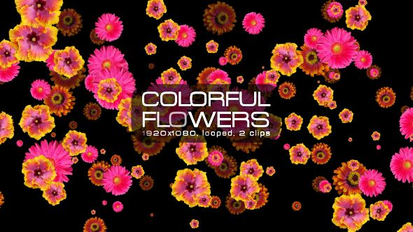 Colorful Flowers Video Animation | 2 clips | Full HD 1920×1080 | Looped | Photo JPEG | Can use for VJ, club, music perfomance, party, concert, presentation | #background #cheerful #colourful #concert #edm #flower #flying #leaves #loops #music #nature #petals #spinning #spring #vj