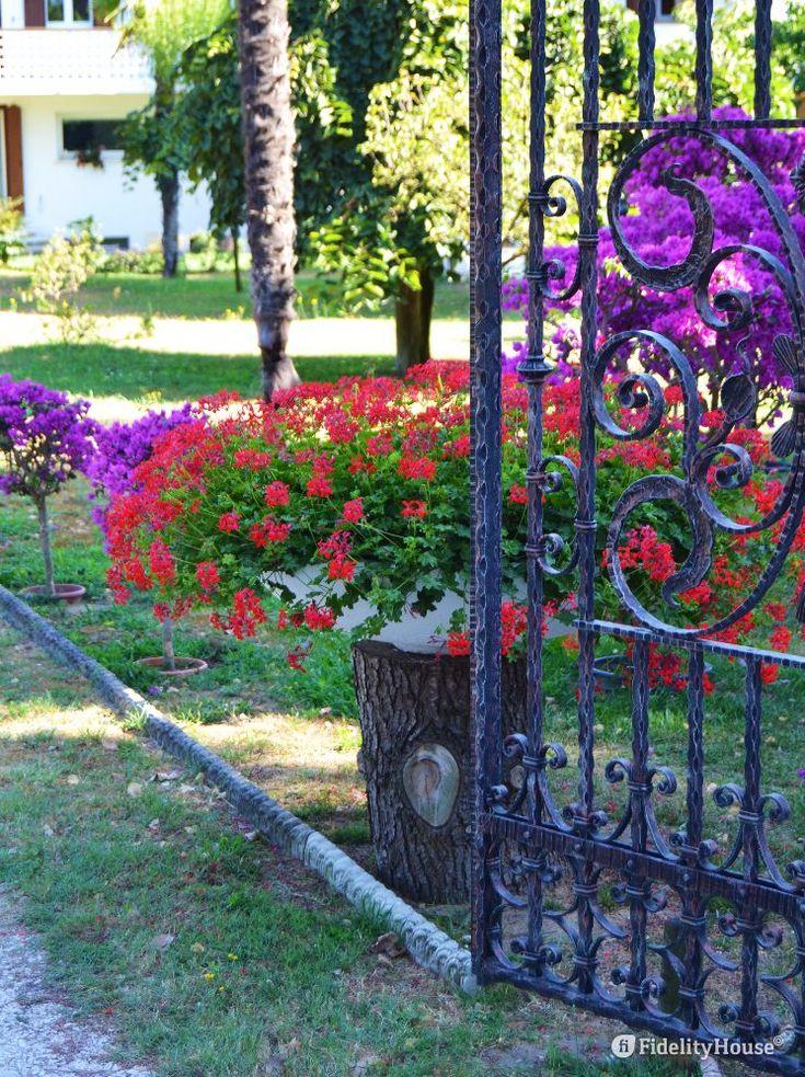 Un cancello aperto sembra tagliare a metà questo bellissimo vaso di gerani rossi che rallegra chi lo possiede e chi passa.