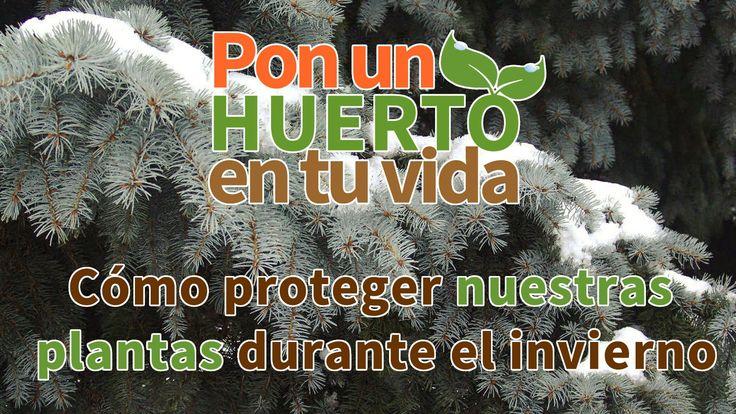 Cómo proteger nuestras plantas durante el invierno - Planeta huerto