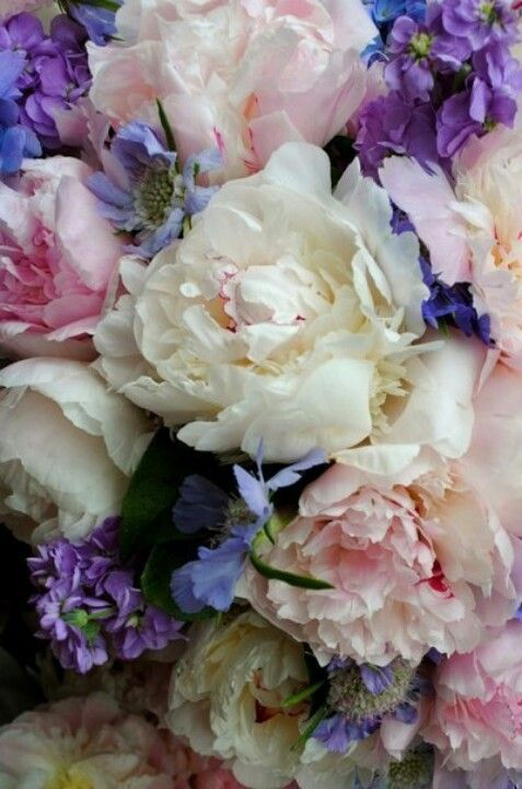 I love Roses and the colours of these roses are simply beautiful!