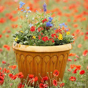 238 best images about Pollinators on Pinterest Gardens