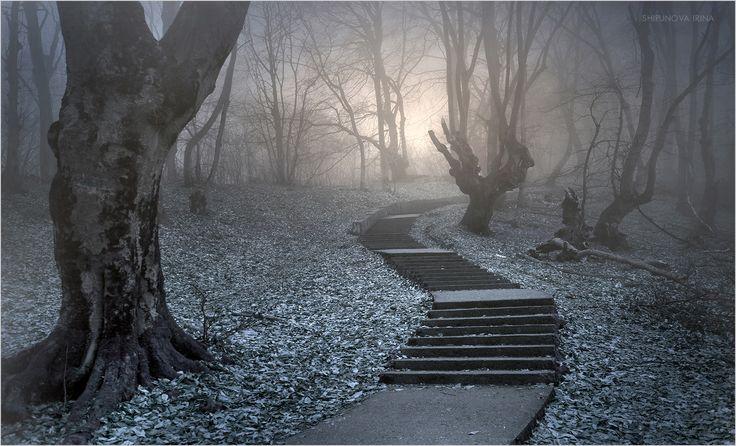 Фотограф Шипунова Ирина (Shipunova Irina) - Мистический лес 7 #1749175. 35PHOTO