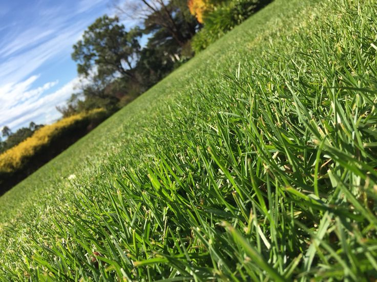 Autumn + rain + Sunlight = grass is pretty green!