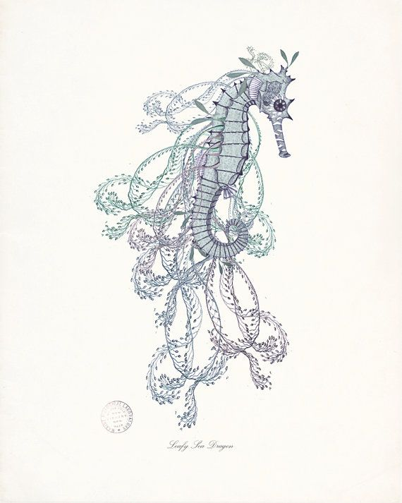 leafy sea dragon coastal sea life giclee art print no 2 8x10
