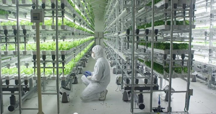 Как Интернет вещей влияет на сельское хозяйство? Во многих странах сельское хозяйство является главным катализатором развития технологий промышленного интернета.