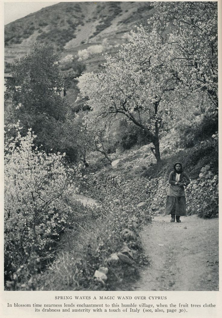 Cyprus 1928 blossom time | illustration,article Unspoiled Cy… | Flickr