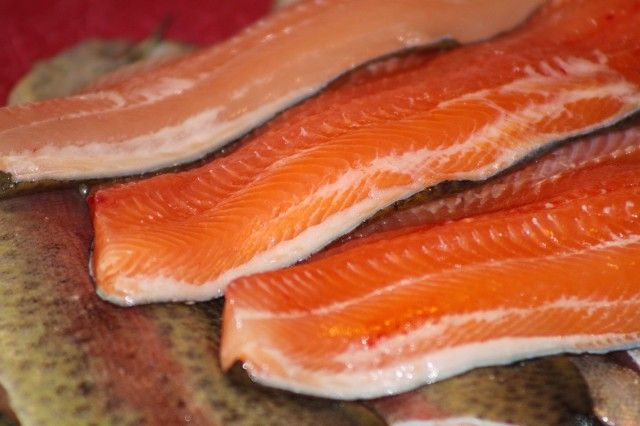 Recipe for trout smoking brine.  Fresh stocked trout fillets ready to be brined and smoked.