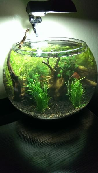 1000 ideas about betta fish bowl on pinterest aquatic for Betta fish bowl ideas
