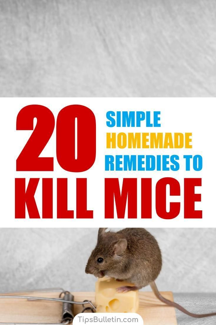 20 Simple Homemade Remedies To Kill Mice Getting Rid Of Mice Diy Pest Control Mice Repellent