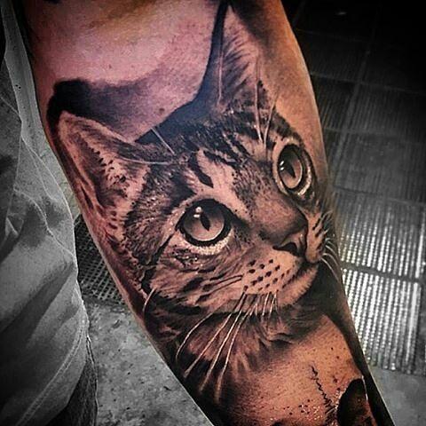 from @chicomorbene -  Cat_ - Apoio: @inkandartclt ...#bishoprotary #grupo_amazon #lauropaolini #fitclothingline #easyinn ... ....@bishoprotary @grupo_amazon @fitclothingline @lauropaolini1 @inkandartclt @inkeeze.  #bishoprotary #easyinn #grupoamazon #sullenclothing #sullen #instadaily #ink #inkedmag #tattooistartmagazine #tattoo #tattoos #tatts #tatuajes #tatuagem #art #artist #artista #gato #instagood #instalike #instafamous #amazing #beautiful #cat #inkedmag  #boanoite