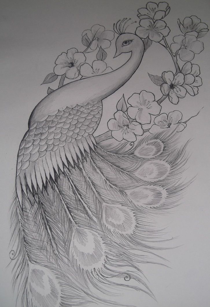 Omg. I want this on my hip. I have been searching for an awesome peacock.....    Girly Peacock Tattoo Design by ~EmilyB3545 on deviantART next tattoo? But with color?