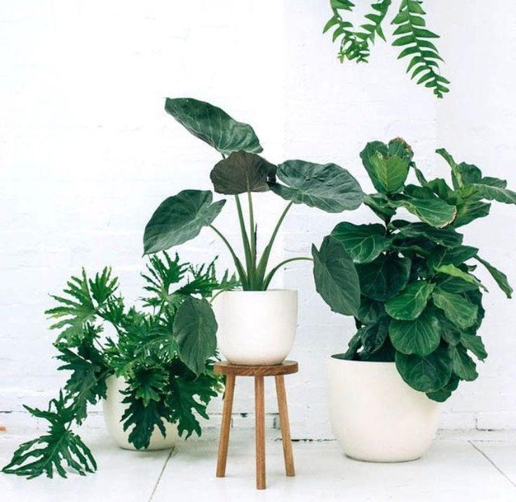 Witte urban jungle met plant op pootjes