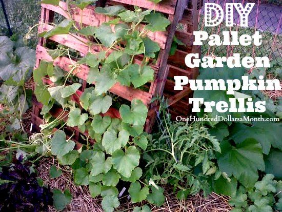 Pumpkin Pallet Garden Trellis! I need to do this next year!! My pumpkins and squash are taking over my garden!
