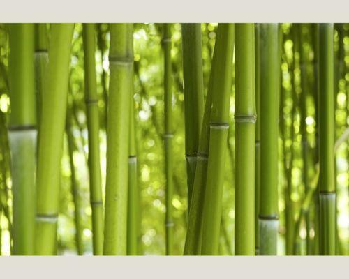 Balkon Sichtschutz aus Bambus – praktische und originelle Idee - balkon garten sichtschutz aus bambus natur garten bamboo wall - bamboo decoration ideas