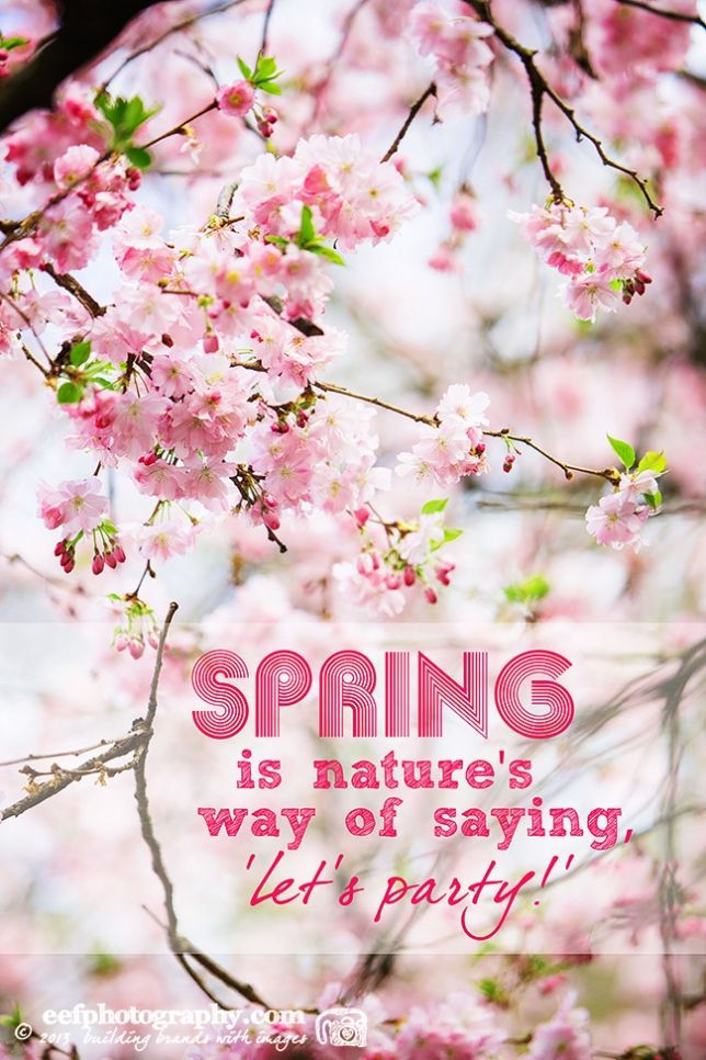 Inspiratie quote   spring is natures way of saying let's party!   www.eefphotography.com