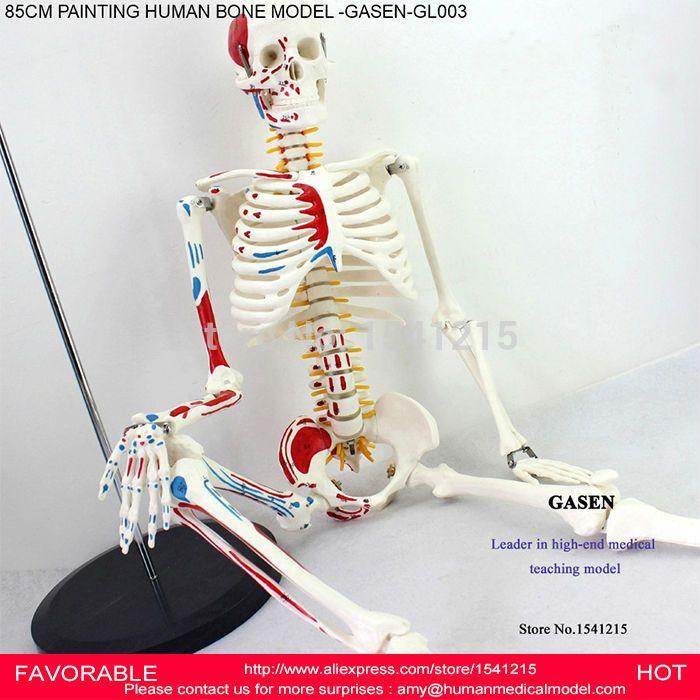 85CM HUMAN SKELETON MODEL HUMAN ANATOMICAL VERTEBRAL ARTERY  NEUROLOGY MEDICAL SKELETON MODEL SPINE MODEL -GASEN-GL003