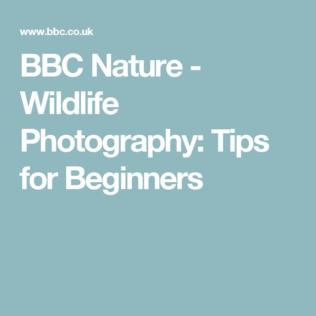 BBC Nature - Wildlife Photography: Tips for Beginners