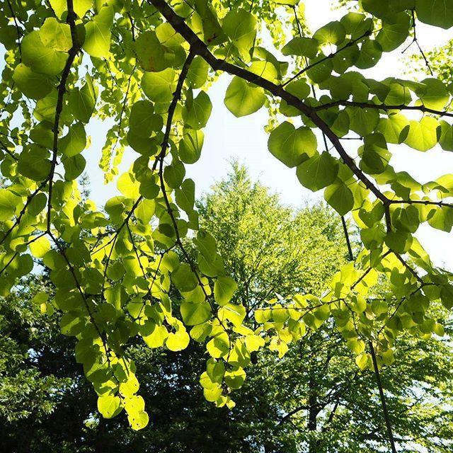 【moon_aqua】さんのInstagramをピンしています。 《. 色々と楽しませてあげたいと ギュウギュウに色々と計画して あっという間に過ぎました。 . キラキラした瞳と、 嬉しそうな笑顔。 . それだけで満足(*´ー`*) . 少しでも覚えてくれていたら。 . #緑 #木漏れ日 #木々 #葉っぱ #森林 #森林浴 #夏休み #夏空 #緑色 #ig_color #team_lovers_夏色2016 #team_jp_ #japan_daytime_view #green #sunshine #trees #leaf #leaves #ig_japan #summer #summerbacation #summerholiday #special_spot_ #nature #naturelovers #naturephotography #naturepower #orympuspen #ダレカニミセタイケシキ #ファインダー越しの私の世界》