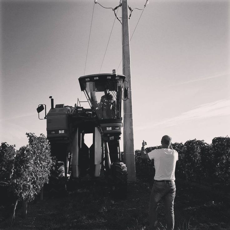 La galere des poteaux EDF #jaimemesvignes#jugazan #bordeaux #bordeauxsup #vignoble #gironde #jaimemesvignes #chateaucurtonlaperriere
