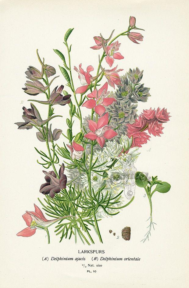 929 best images about botanical illustration on pinterest for Botanical tattoo london