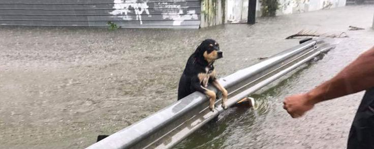 We will be donating net profits from our consumer website sales between Wednesday, 8/29 to Sunday 9/3, to support dogs affected by Hurricane Harvey.