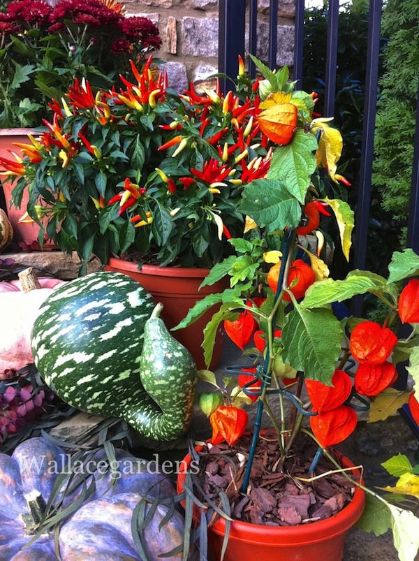 Pumpkins on Porches!: Decor Ideas, Fall Ideas, Pumpkin, Changing Color, Backyard Gardens, Add Color, Bright Colors, Future Gardens, Front Porches