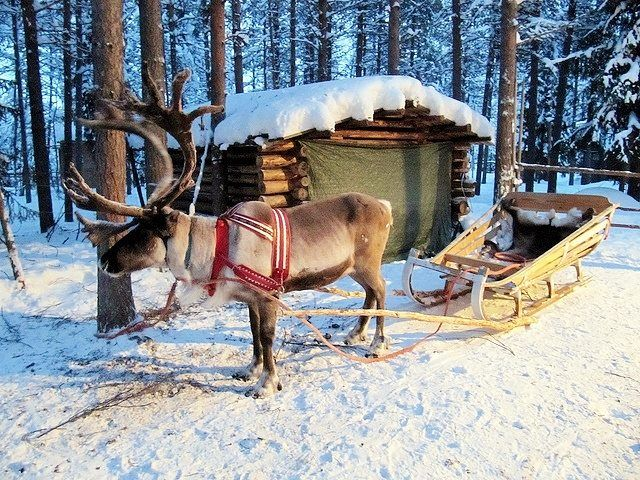 Statement Clutch - snow sleigh deer green by VIDA VIDA 79RMK
