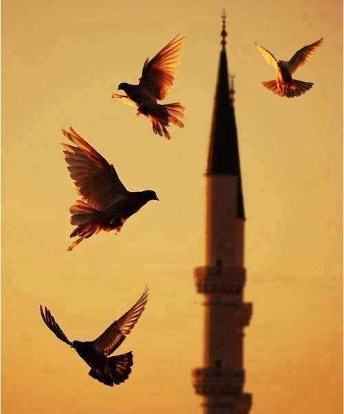 Bir şey olmuyorsa: Ya daha iyisi olacağı için, Ya da gerçekten olmaması gerektiği için olmuyordur. Şu uçan kuşlara bak! Ne ekerler, ne biçerler... Onların rızkını düşünen Allah; seni mi ihmal edecek sanırsın! Yeter ki sen istemeyi bil...  Hz.Mevlana