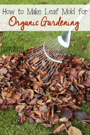 How to Make Leaf Mold for Organic Gardening - tips for using the leaves from your yard to create leaf mold so you can use leaf mold in your garden soil.